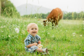 boy in a field of daisies on a background of a cow
