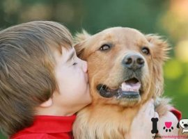 niño con un golden retriever