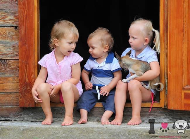 tres niños pequeños con un perro chihuahua